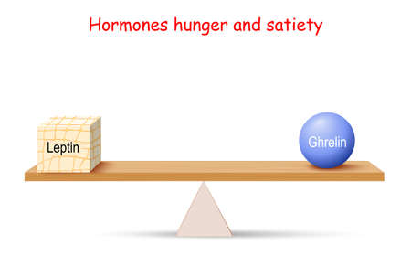 Balance of Hormones. hunger and satiety. Leptin (adipose tissue) and Ghrelin. Vector illustration