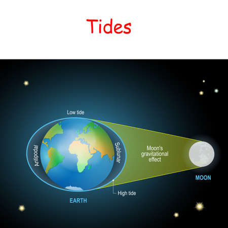 tides diagram. Low and high lunar tides. Effect of Moon gravitational force on seacoast water level. vector illustration for astronomy, geography, educational and science for kids.