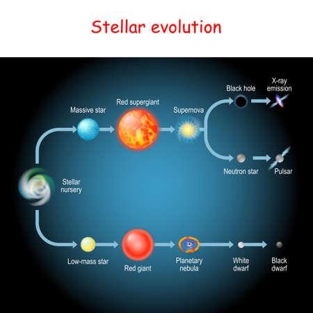 Évolution stellaire. Cycle de vie d'une étoile. de la pépinière stellaire et de la géante rouge aux naines noires et blanches, à la nébuleuse planétaire, à la supernova, au pulsar, à l'étoile à neutrons et au trou noir