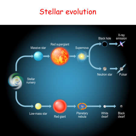 Stellar evolution. Life cycle of a star. from Stellar nursery and Red giant, to Black and White dwarfs, Planetary nebula, Supernova, Pulsar, Neutron star, and Black hole Vettoriali