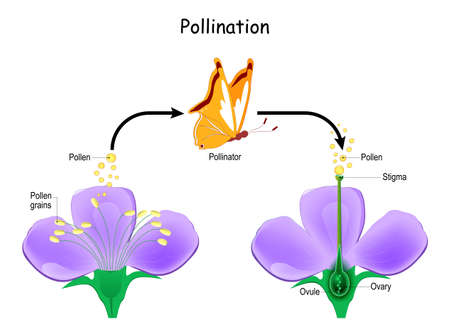 Cross-pollination using an animal of pollinator (butterfly). Anatomy of a flower. Flower Parts. Detailed Diagram with cross section. Reproduction in Plant. useful for study botany and science education Ilustração