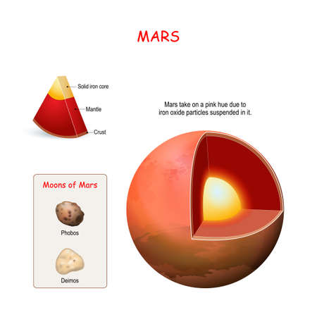 Mars internal structure. cross section of planet from core to mantle and crust. Deimos and Phobos - two Moons of Mars. Solar system. infographics. vector diagram. Easy to edit