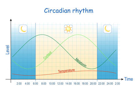 Circadian rhythm. Diagram of melatonin, and cortisol hormones level during day (24 hours). temperature schedule. human biological clock. Chart of awake and sleep.