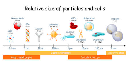 comparison of Relative size of particles and cells on biological scale. different sizes of biological cells, bacteria, and viruses. Microscopic techniques that are required to see the objects.