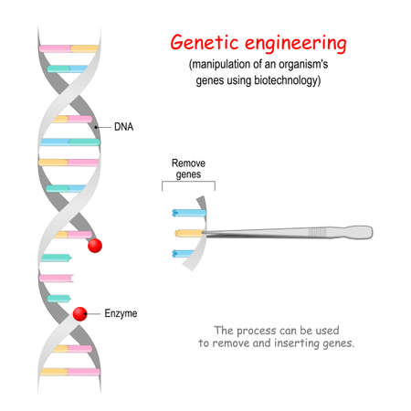 Genetic engineering. remove genes from DNA. CRISPR. Process can be used to inserting and remove genes. genome editing 矢量图像