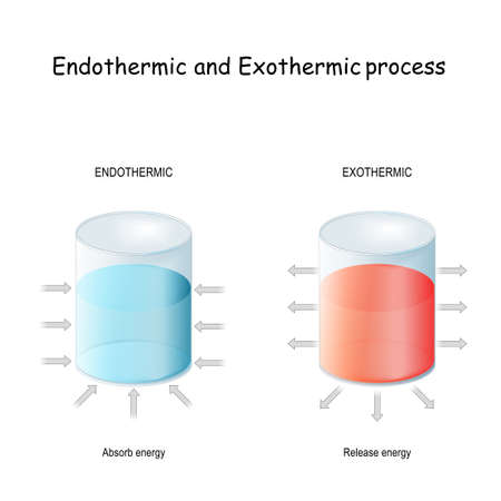 Endothermic reaction (absorbs thermal energy) and exothermic process (releases energy). thermodynamics. Chemical or a physical process. Vector illustration
