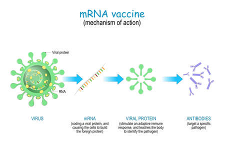 mechanism of action of the RNA vaccine. COVID-19. pandemics caused development of the mRNA technology for new way to deliver a messenger RNA into a cell to produce antigens and antibodies for different disease.