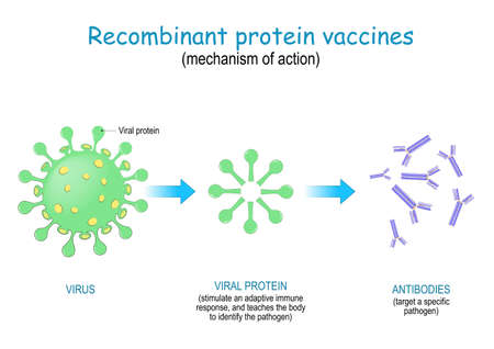 Recombinant protein vaccine. mechanism of action to prompt the body to produce antibodies against different infectious diseases. Vector Illustration