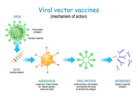 Viral vector vaccines. Vaccine use a safe virus (as a Trojan horses) to insert pathogen genes in the cell to produce specific antigens and stimulate an immune response.