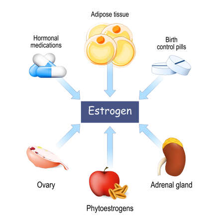 Sources of estrogen in women. From ovary, adipose tissue, and adrenal gland to phytoestrogens, contraceptive, and hormone pills. Vector illustration Vektorové ilustrace