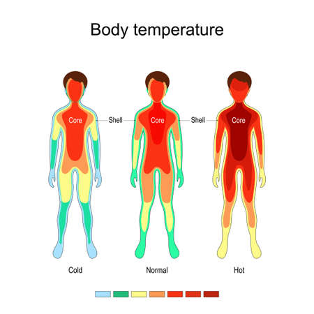 Body temperature and thermoregulation. Normal, Cold, and Hot. The core remains largely constant in temperature, the temperature of the body shell is subject to external and internal influences. Vecteurs