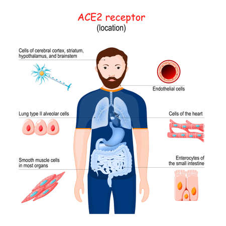 ACE2 receptor location . Angiotensin converting enzyme.