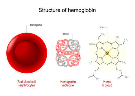 Structure of hemoglobin. Red blood cell, hemoglobin molecule, and structural formula of a Heme b-group. Vector illustration
