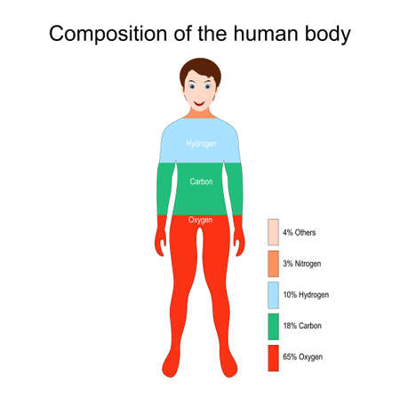 The main elements that compose the human body (Oxygen, Carbon, Hydrogen and Nitrogen). Percentage. Vector illustration for education Illustration