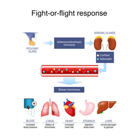 acute stress response (hormone). Cortisol Adrenalin Fight-or-flight response. Fight-or-flight response. fight-flight-or-freeze. Vector Poster for education