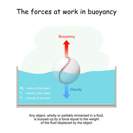 The forces at work in buoyancy. Gravity and Buoyancy. Archimedes' principle. ball floating in a glass. Experiment in physics lesson. Any object, wholly or partially immersed in a fluid, is buoyed up by a force equal to the weight of the fluid displaced by the object. Mass, and density.