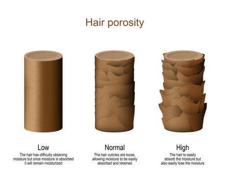 hair porosity. Low - difficulty obtaining moisture but once moisture is absorbed it will remain moisturized. Normal - hair cuticles are loose, allowing moisture to be easily absorbed and retained. High - hair to easily absorb the moisture but also easily lose the moisture