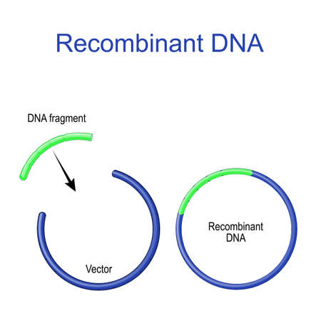Plasmids and Recombinant DNA. foreign DNA fragment is inserted into a plasmid vector. Gene cloning. recombinant subunit vaccine. Molecular Biology. scientific research