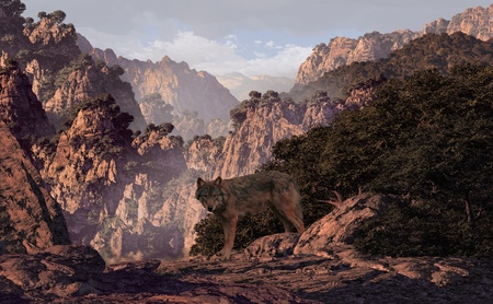 Wolf coming out of the woods in a mountain canyon.