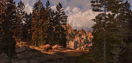 Buffalo grazing in the early morning light in the Rocky Mountains.