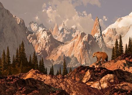 oso: Oso grizzly de monta�a en el pa�s alto de las monta�as rocosas.