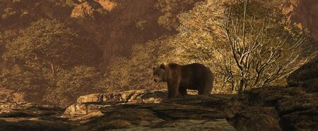 Brown bear in a canyon landscape in the Rocky Mountains.