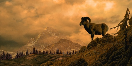 rocky mountain bighorn sheep: Bighorn sheep in the Rocky Mountain high country. Stock Photo
