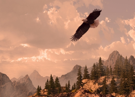 Bald eagle soaring in the Rocky Mountain high country. photo