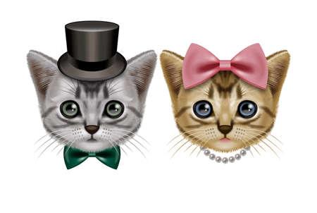 cute kitten: American Shorthair Stock Photo