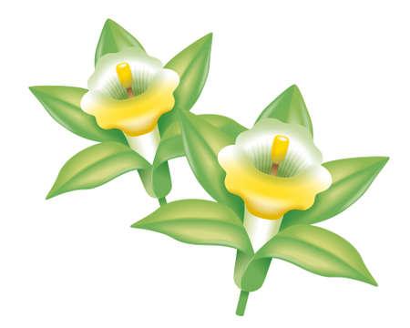 clippings:  Vanilla flower Stock Photo