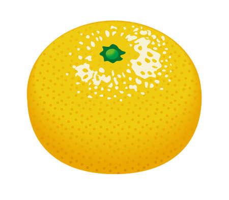 Satsuma oranje Stockfoto