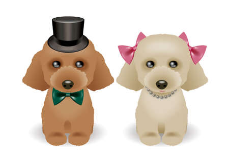 Toy Poodles photo