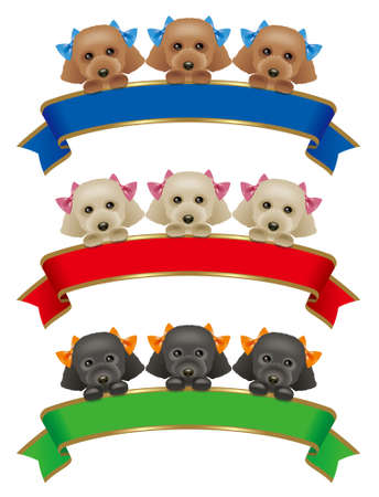 Toy Poodles,ribbon photo