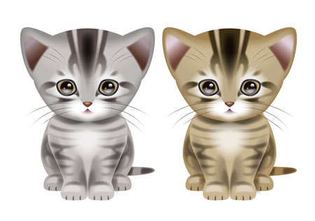 breeders: American Shorthair Stock Photo