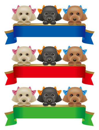 one trim: Toy Poodles,ribbon Stock Photo