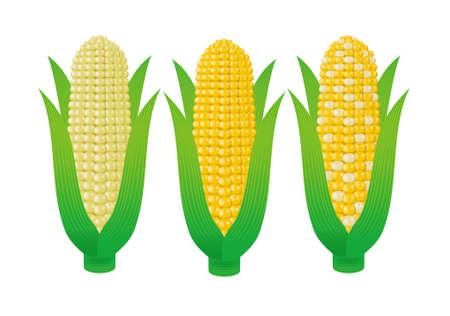 corn cob: corn