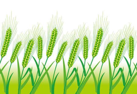 winter wheat: Wheat field,Background consecutive