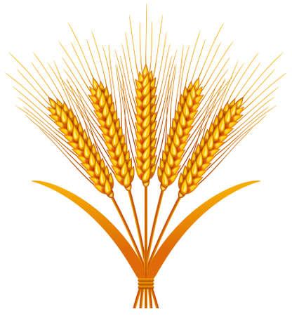 winter wheat: Wheat