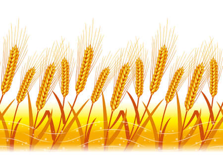 Wheat field,Background consecutive