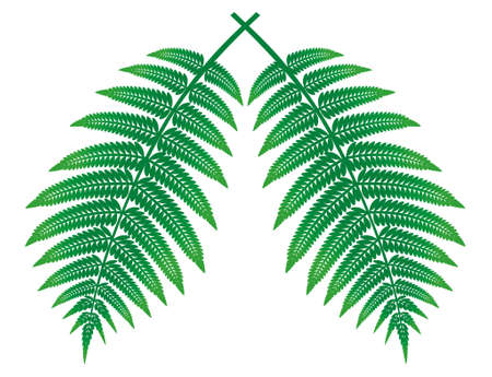 clippings: Ferns, green leaves