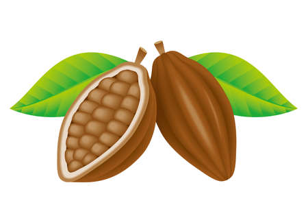 Cocoa beans.