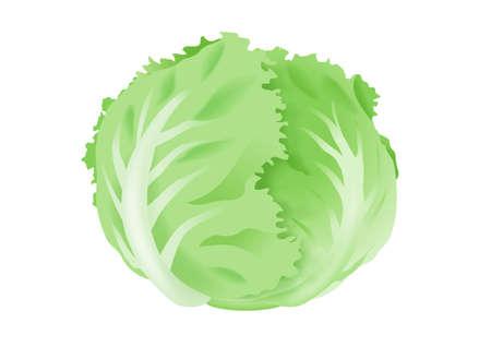 healty eating: Lettuce on white