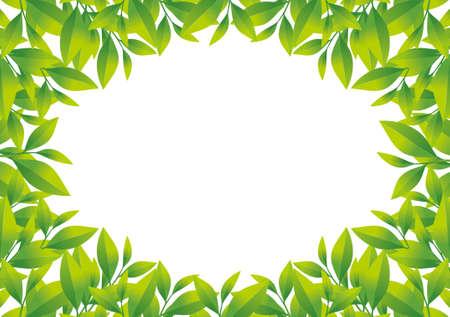 tea plantation: Illustration of frame of tea leaf.  Camellia sinensis.