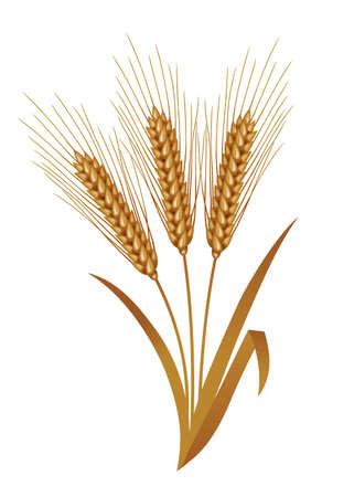 winter wheat: Illustration of wheat. Wheat after harvest. Stock Photo