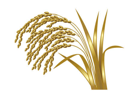Illustration of an ear of rice. Metallic gold.