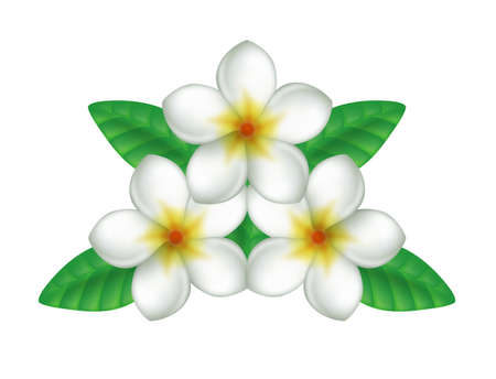 guam: Illustration of white plumeria.  White background.