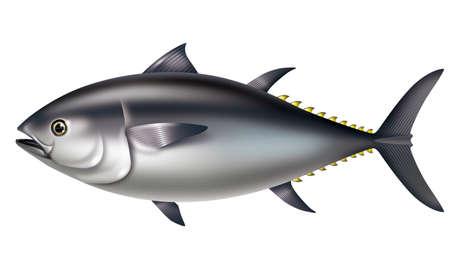 bluefin tuna: Illustration of Pacific bluefin tuna. And Southern bluefin tuna. Stock Photo