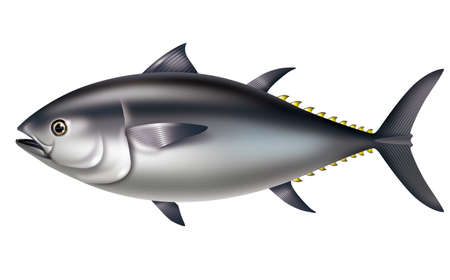 Illustration of Pacific bluefin tuna. And Southern bluefin tuna. Stock Photo