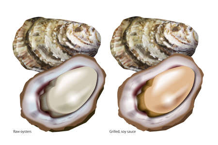 Illustration of oysters.