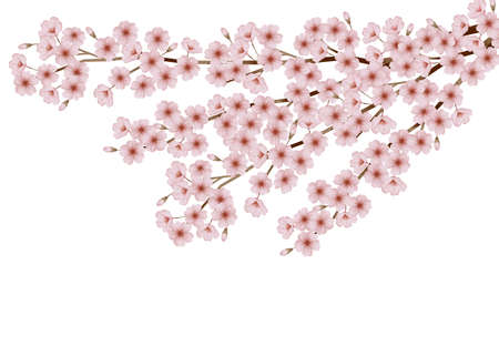Illustration of the cherry blossom viewing. A spring festival of Japan. 免版税图像